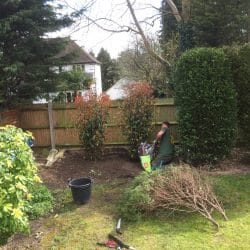 Start this spring with a garden clearance. Plan the work, assess whether tree felling is required & find the best ways to use your garden spaces. Check whether your garden clearance company is a professional tree surgeon.