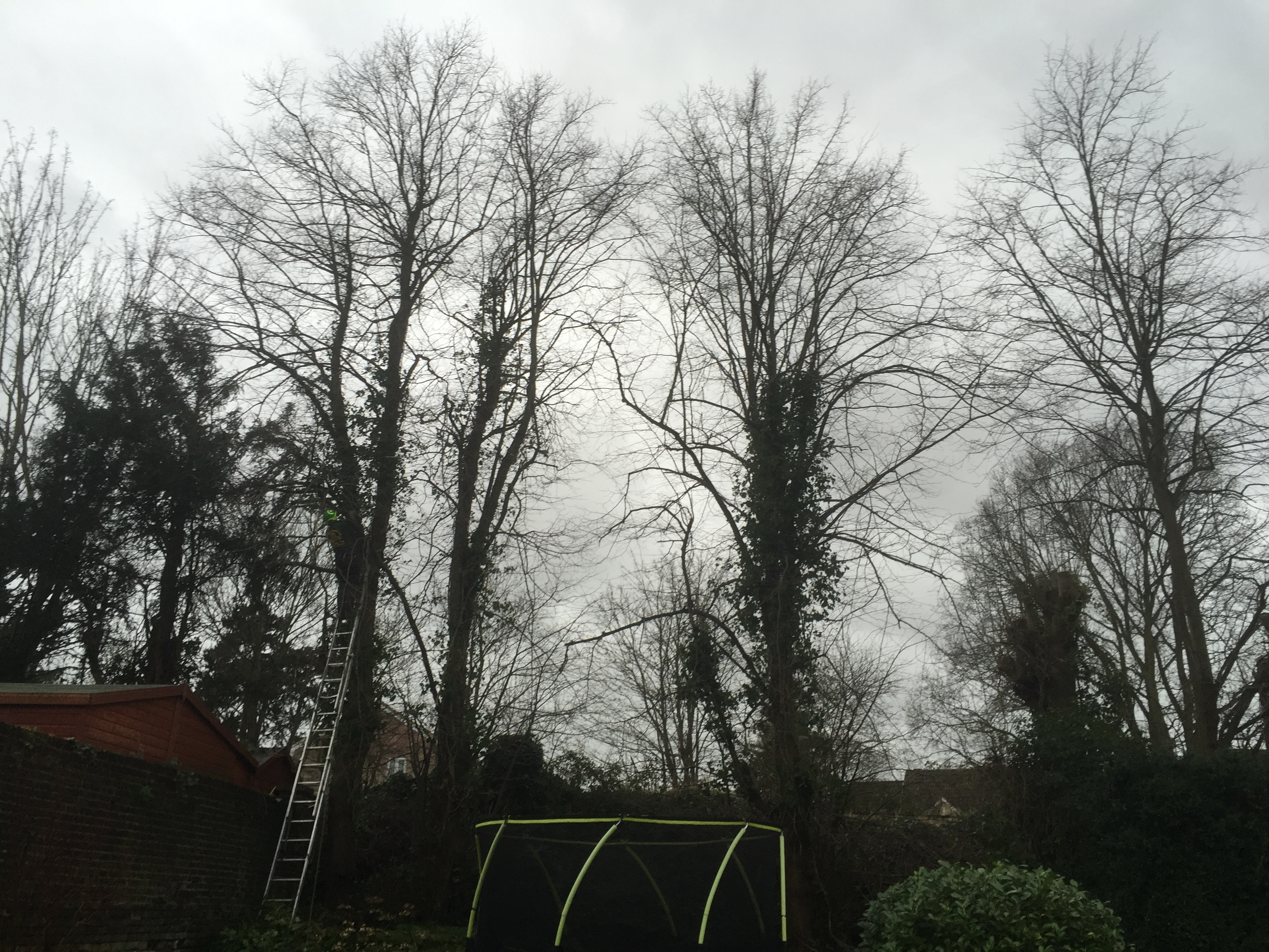 Before-Lime tree reduction