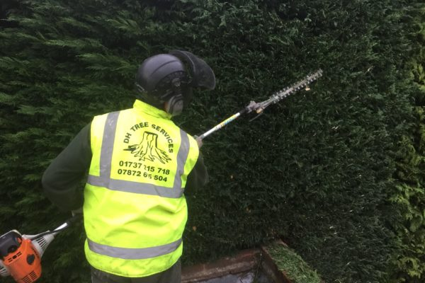 hedge-trimming-ashtead