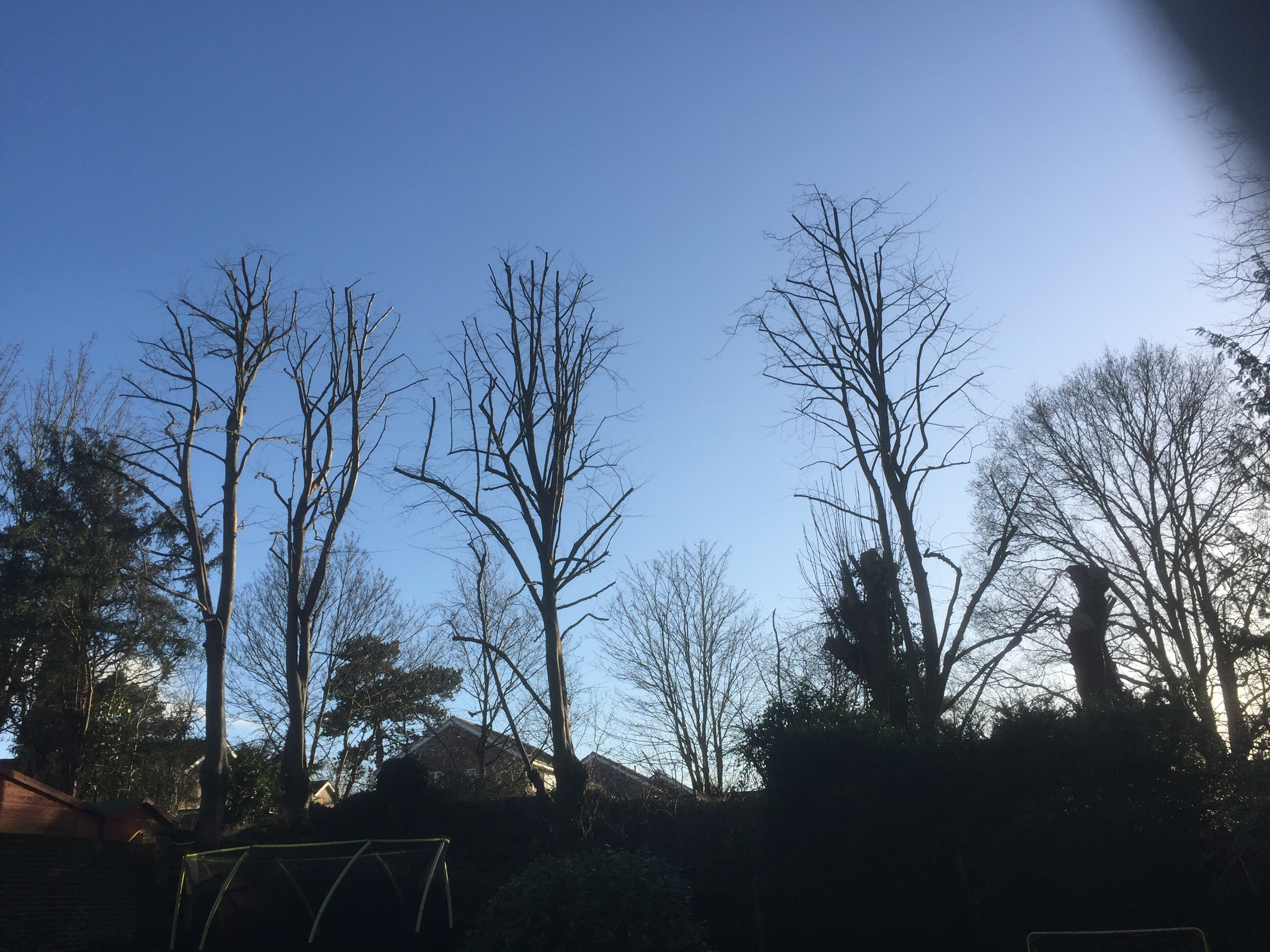 After-Lime tree reduction