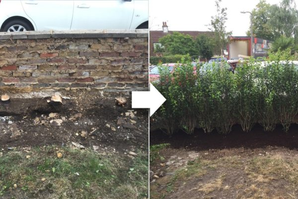 tree-planting-before-and-after