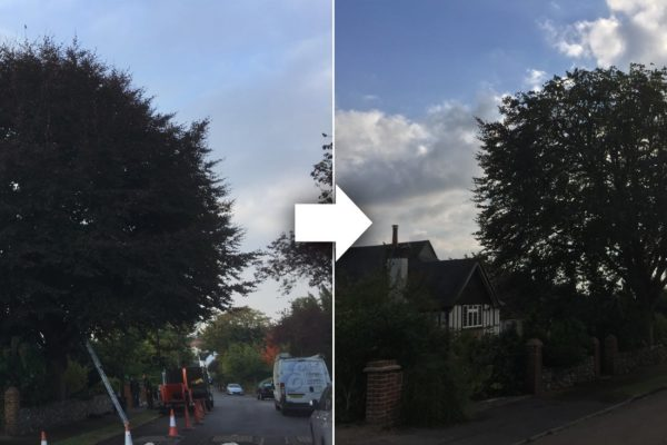 tree-reduction-purley-before-and-after