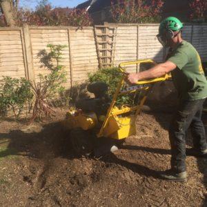 tree-stump-removals-surrey