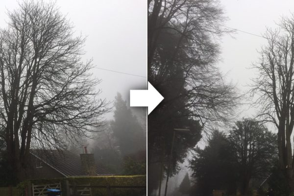 tree-surgeon-london-before-and-after