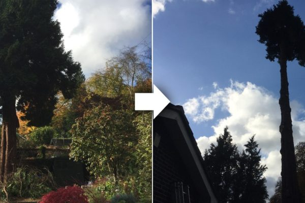 tree-surgeon-worcester-park-before-and-after