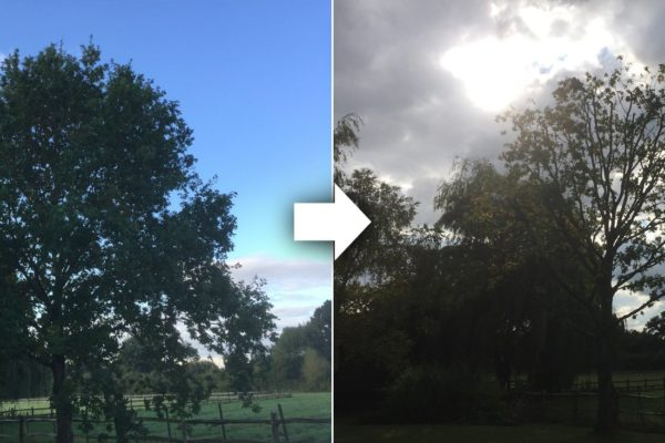 tree-surgery-surrey-before-and-after