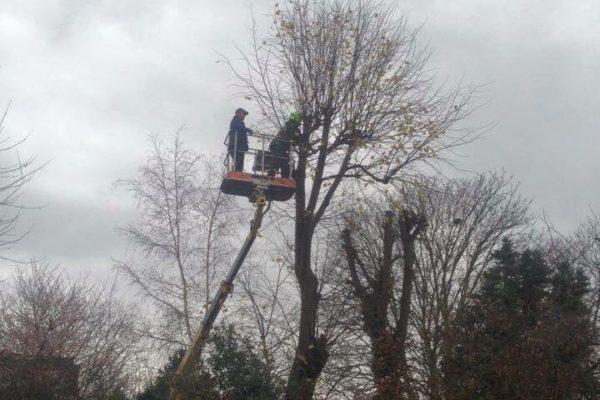 tree-company-barnes