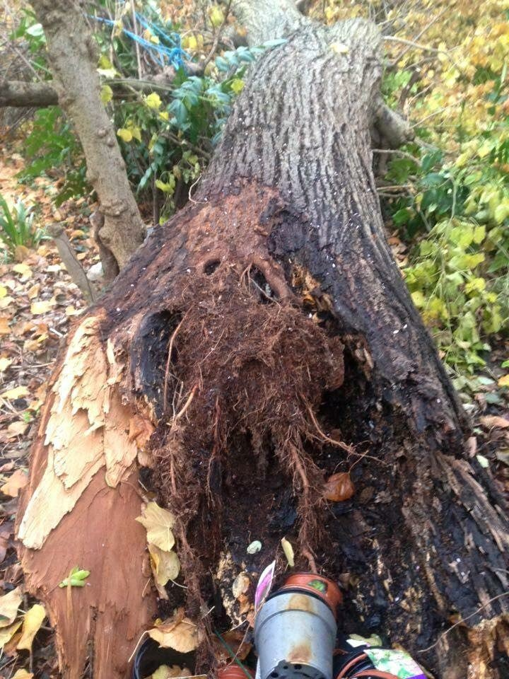 Tree Removal Specialist Dangerous Tree In Barnes Dh