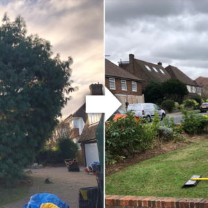 surrey-pine-removal-before-and-after