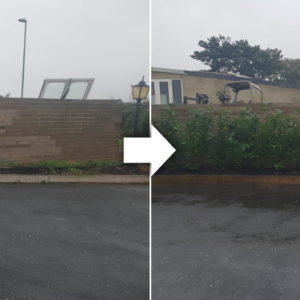 tree-planting-surrey-before-and-after