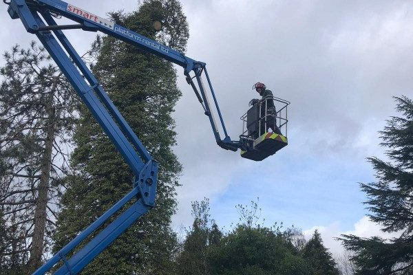 tree-removal-sutton