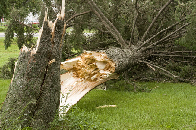Tree maintenance guides - how to manage storm damaged trees in your garden
