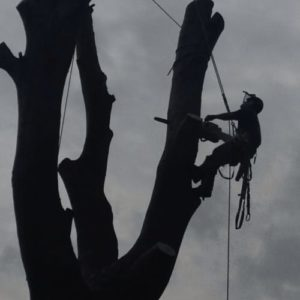 Tree felling in Surrey