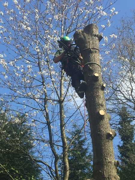 Tree maintenance experts - Guide to the benefits of tree pruning