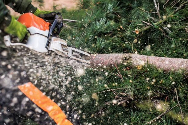 Tree trimming services Surrey